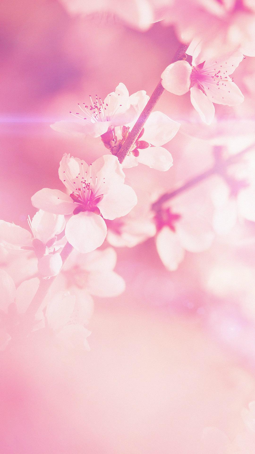 Light Pink IPhone Wallpaper HD