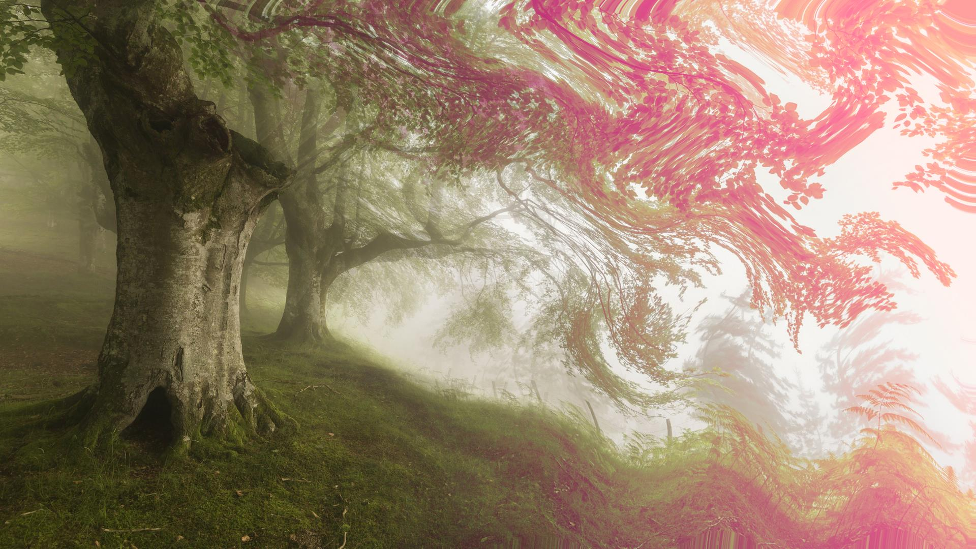 Psychedelic Background Forest