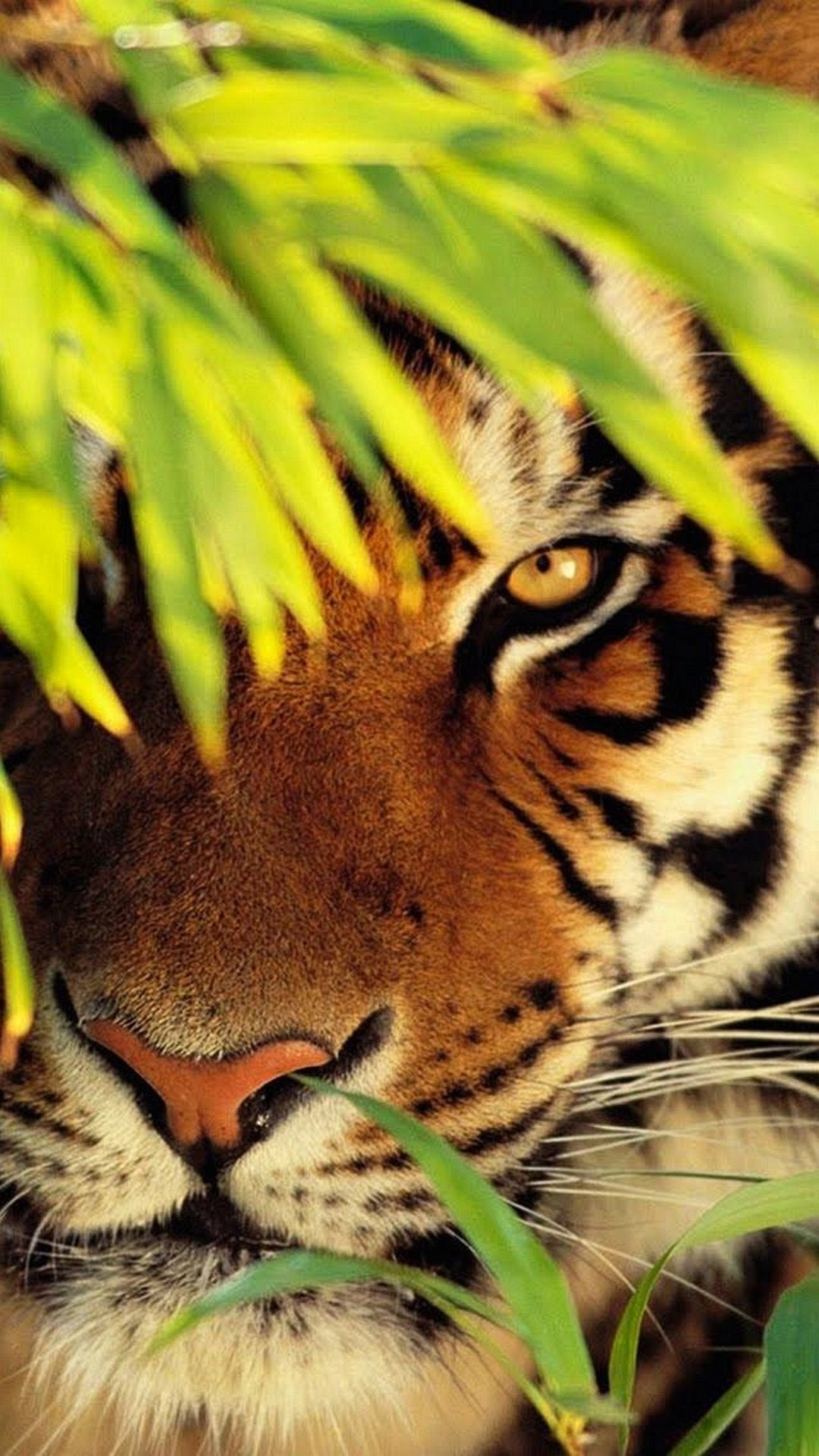 Animals Wallpapers Wallpaper Iphone 7 1080 1920 Full Hd