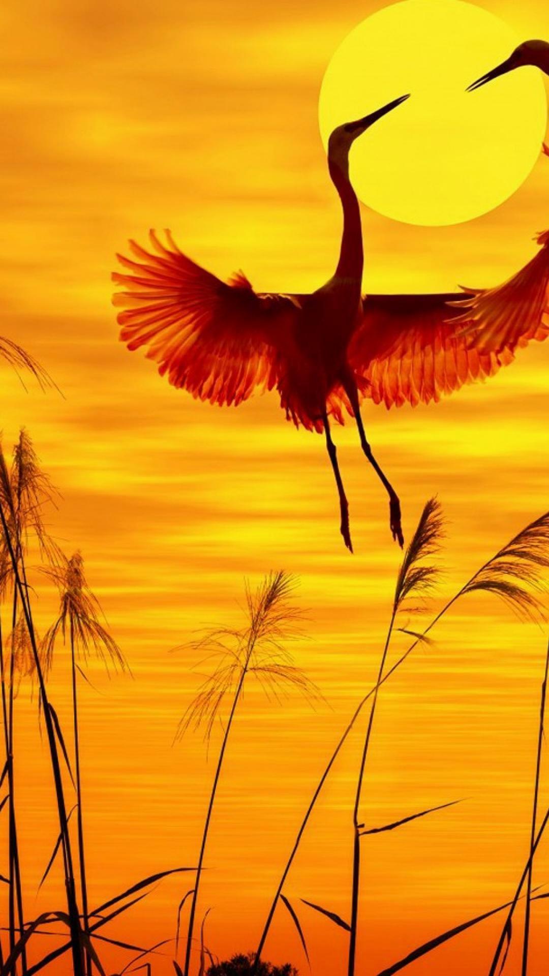 Beautiful Wallpaper Android HD wallpaper Beautiful Birds ...