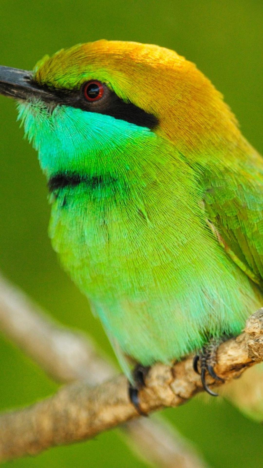 Birds Wallpaper birds of sri lanka animals bird iphone 6 ...