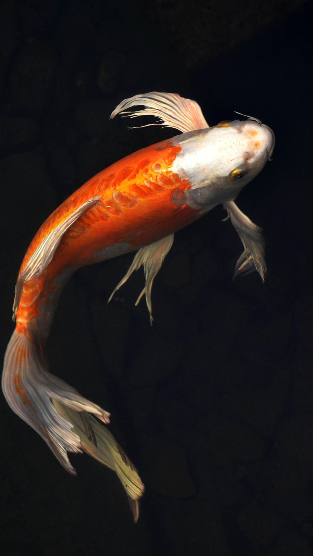 Fish Wallpaper Fish iPhone 7 wallpaper 1080x1920 ...