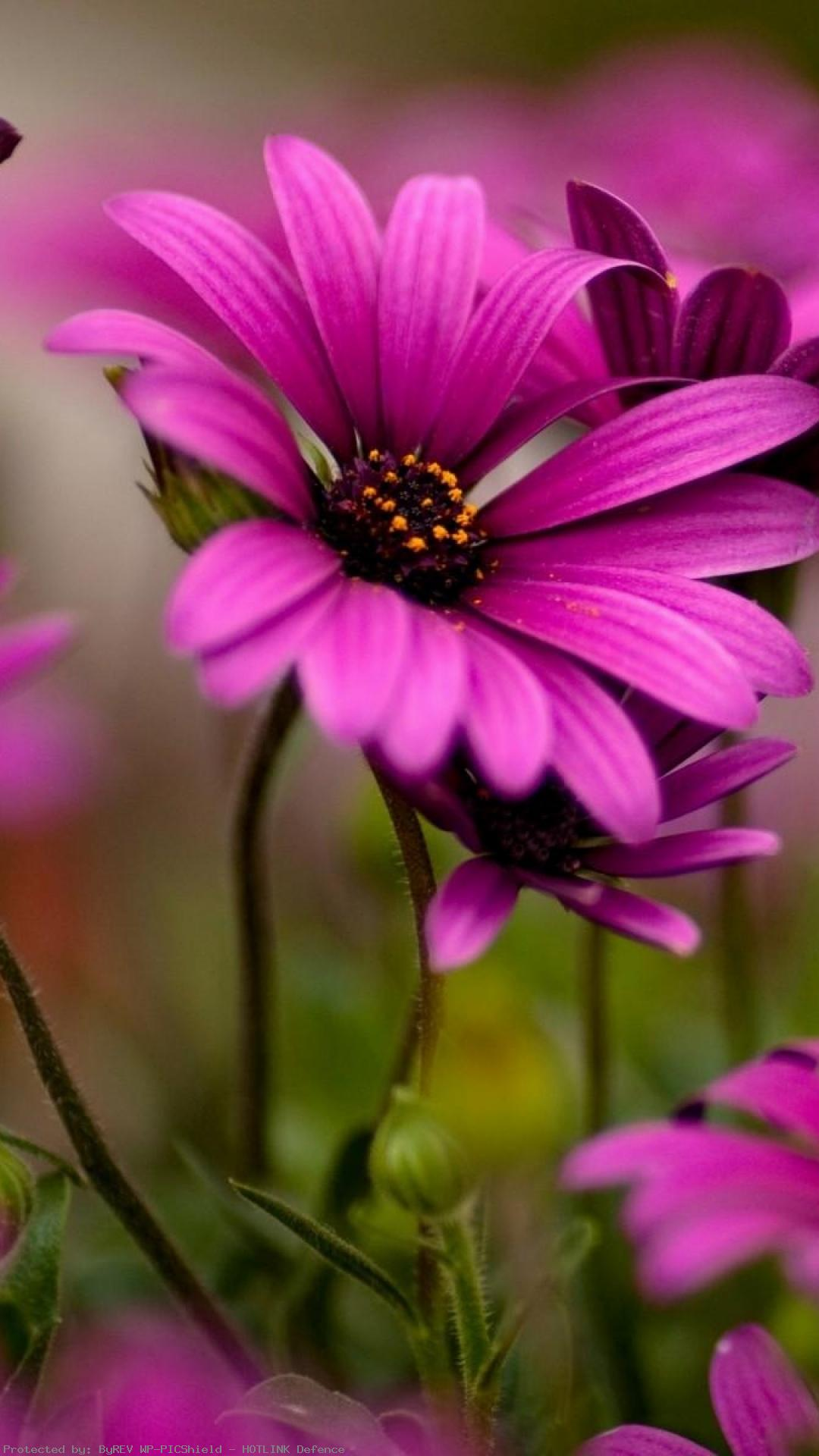 Beautiful Flowers wallpapers pictures PC Full HD ...