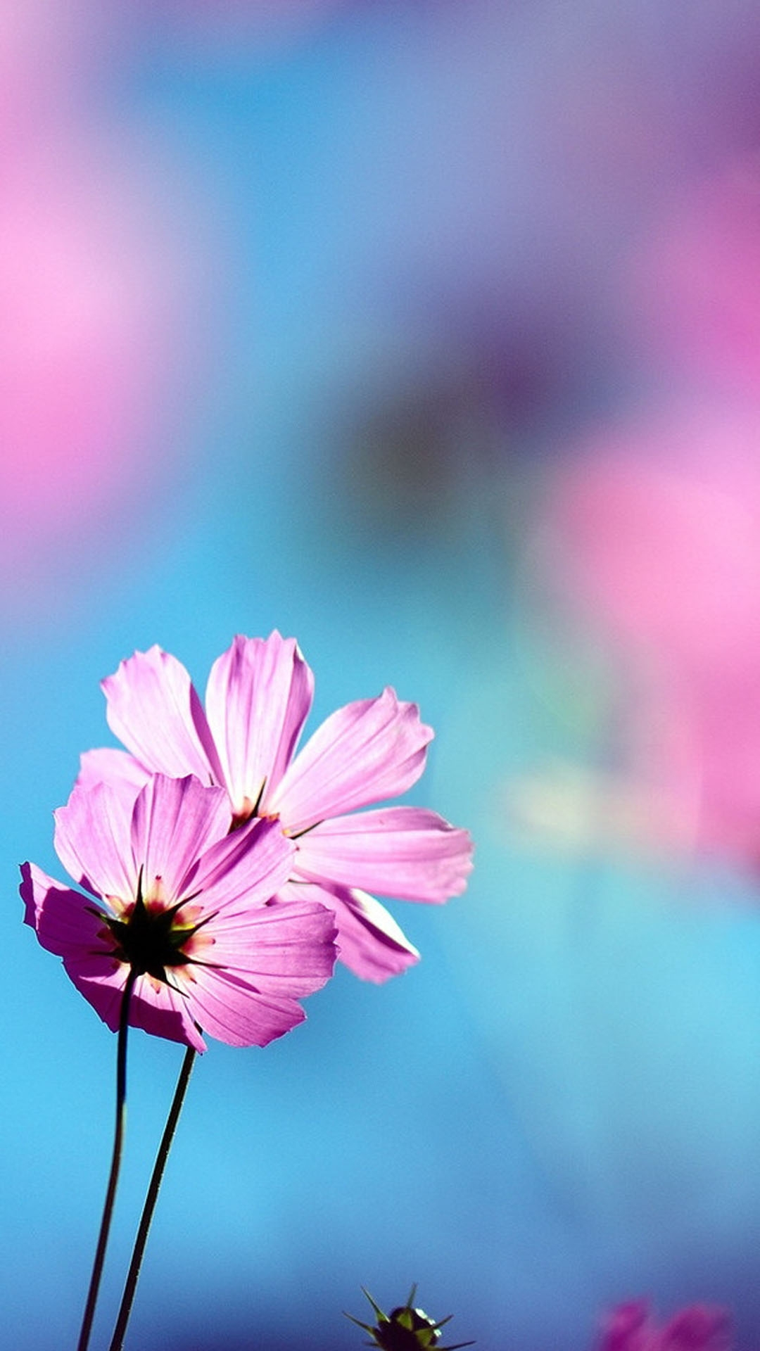 Flowers Wallpaper flowers phone wallpapers download pink ...