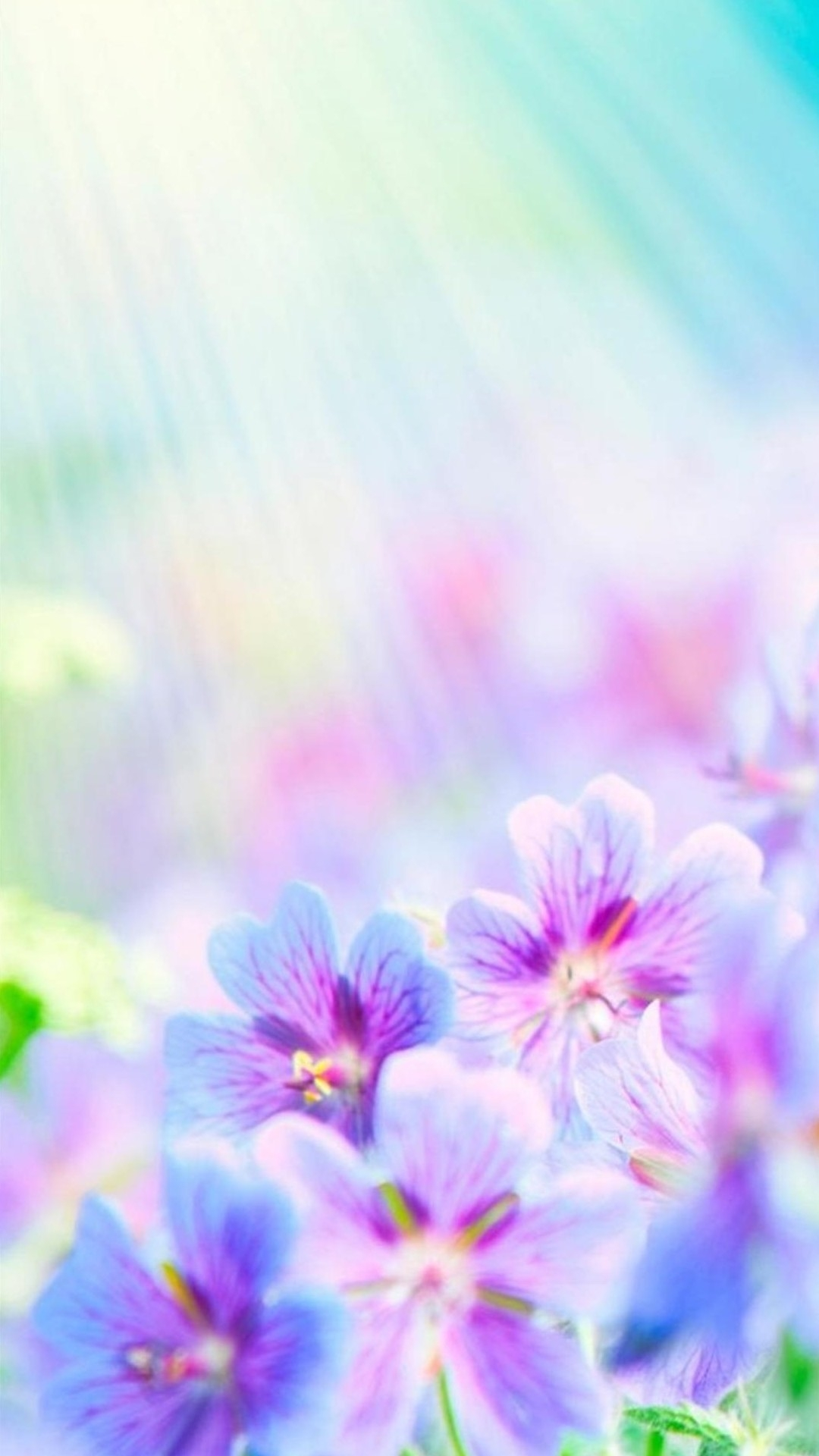 Flowers Wallpaper Flowers Phone Wallpapers Flower Android