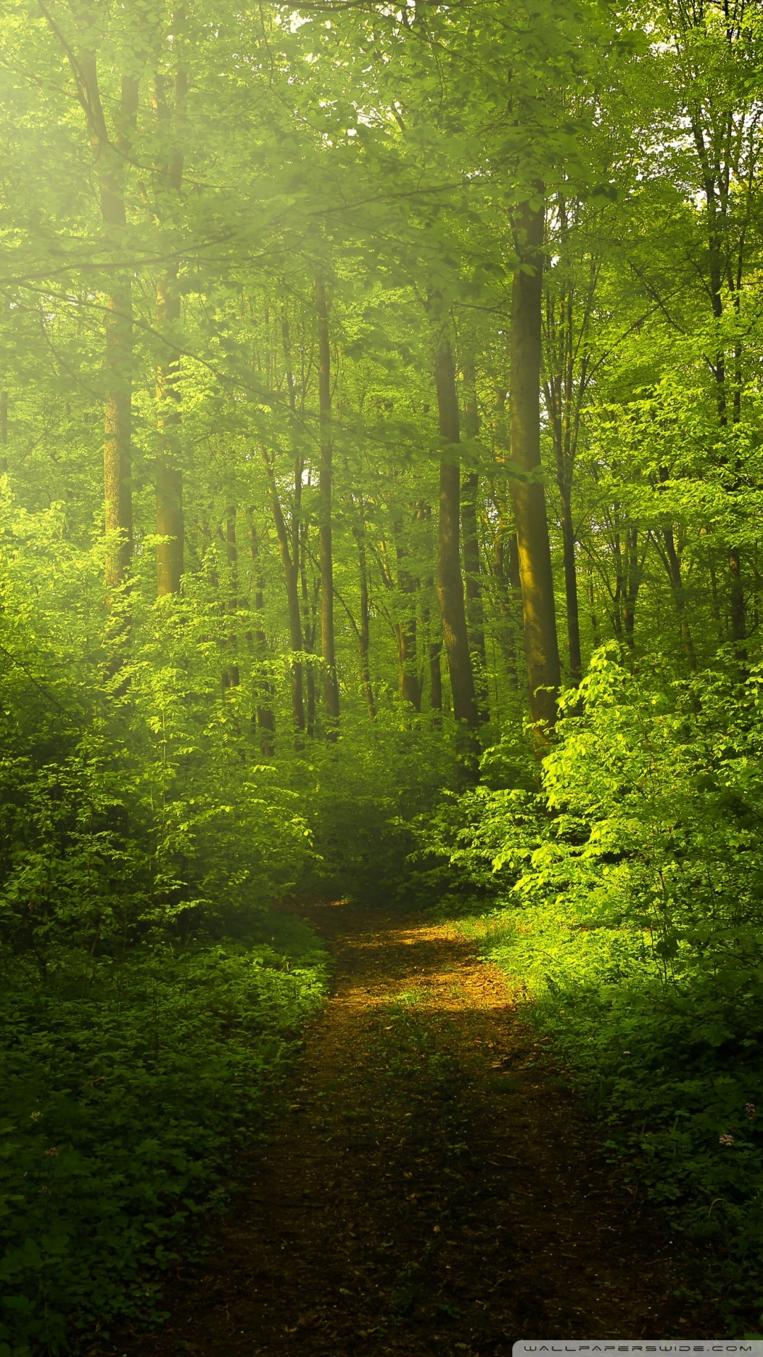 Beautiful Wallpapers Of Nature For Mobile: Nature Wallpaper Beautiful Nature Image Green Forest