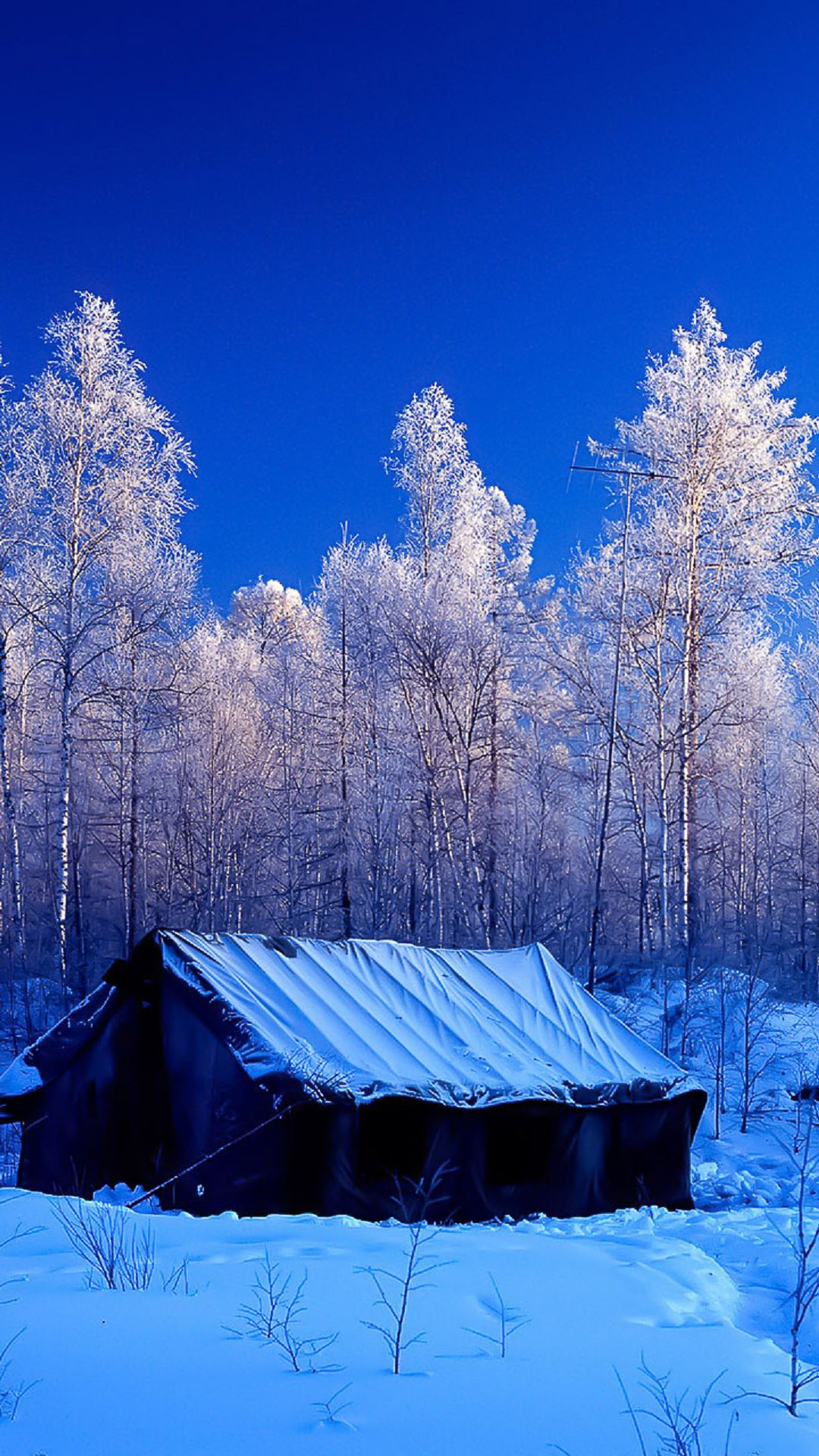 Wallpaper Images Snow Forest Tent Winter Nature Android